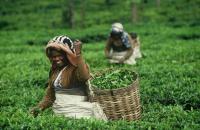 Zdjęcia pracowników producenta Fair trade - link do galerii