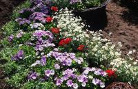 kwiatyCervia